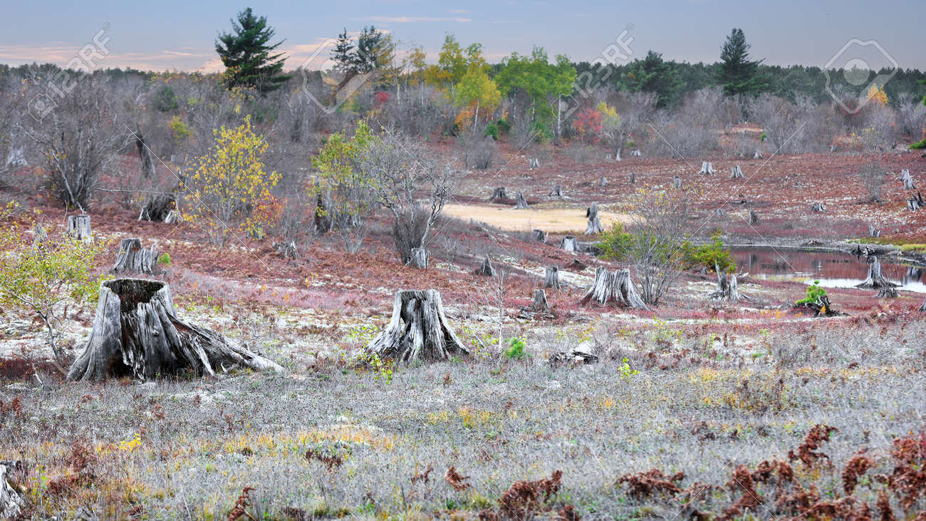 Several dead and cut trees in the open land in Michigan upper peninsula - 163916614