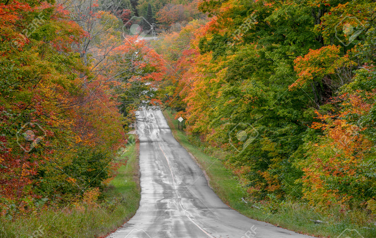 Colorful autumn trees by rural road in Michigan - 163916616
