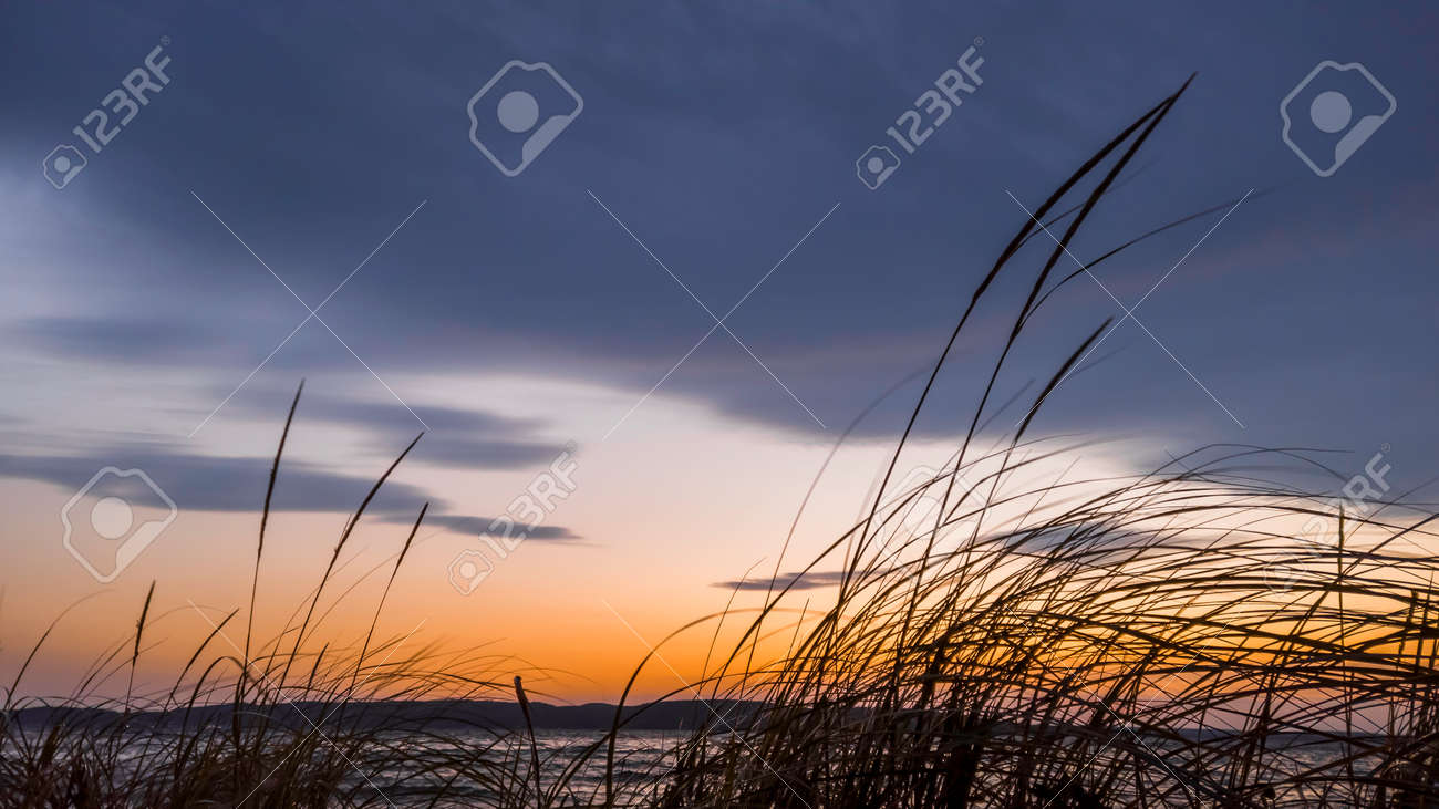 Tall grass at the beach against colorful evening sky - 164161330