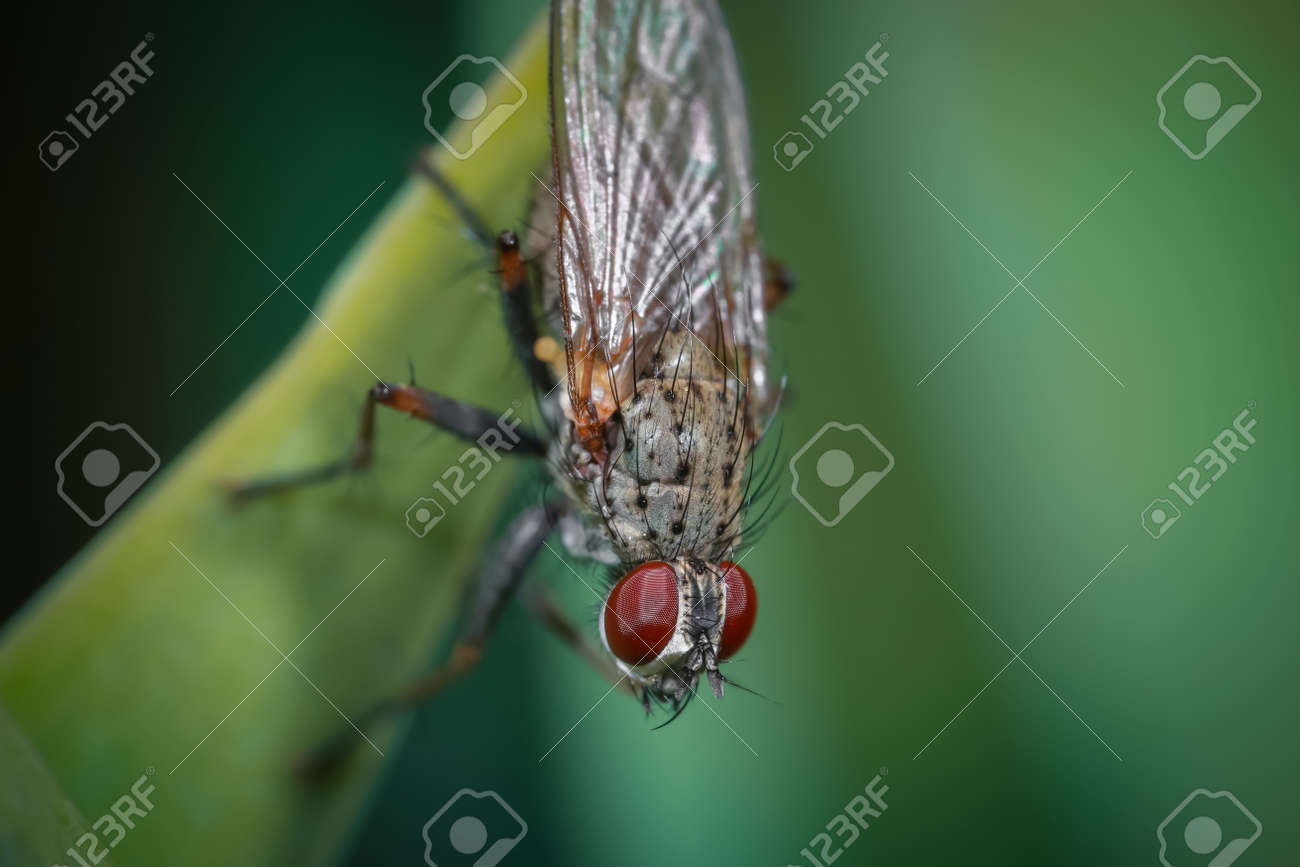 Close up shot of a fly on a leaf - 164161379