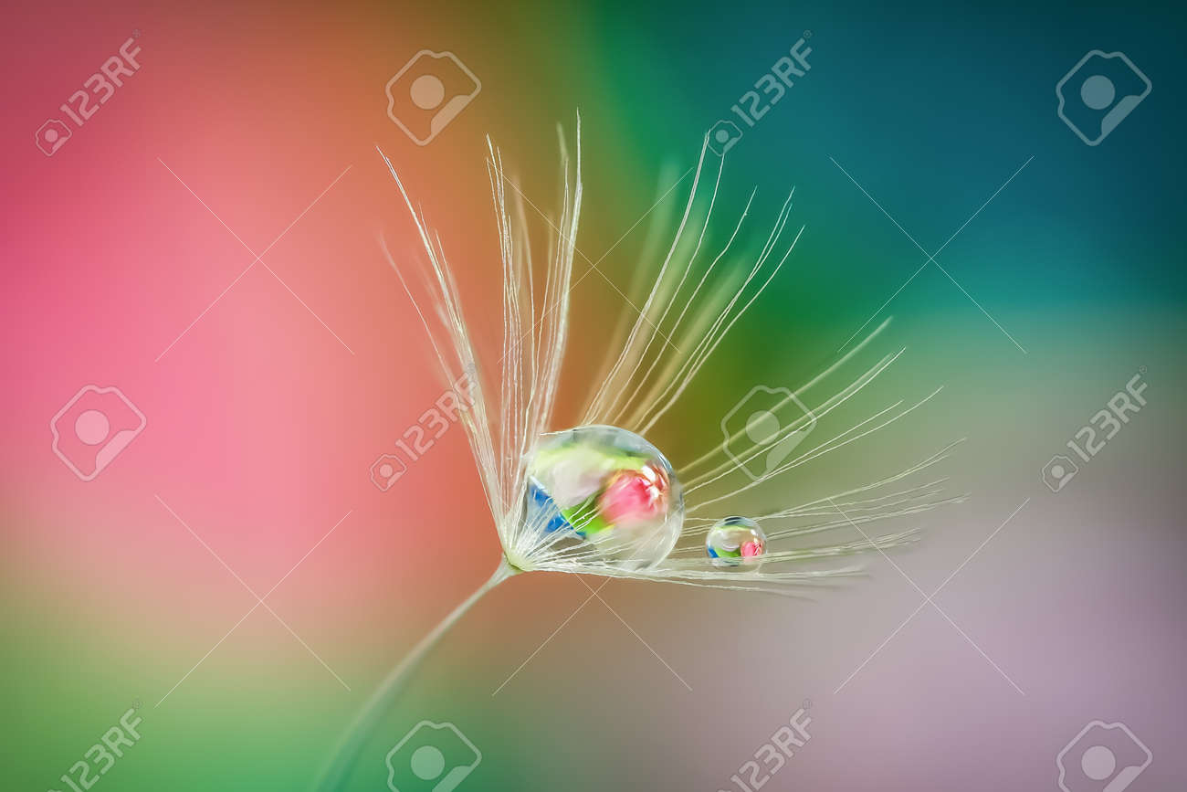 Close up shot of Dandelion holding water droplet - 163207449