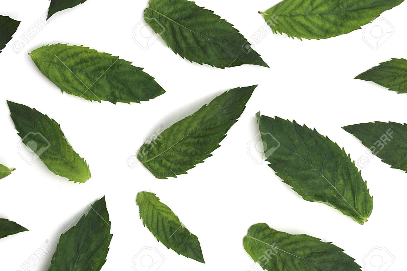 Texture of green fresh mint leaves lie on a white background - 154070126
