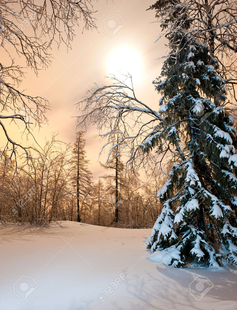 winter forest at night Stock Photo - 8396115