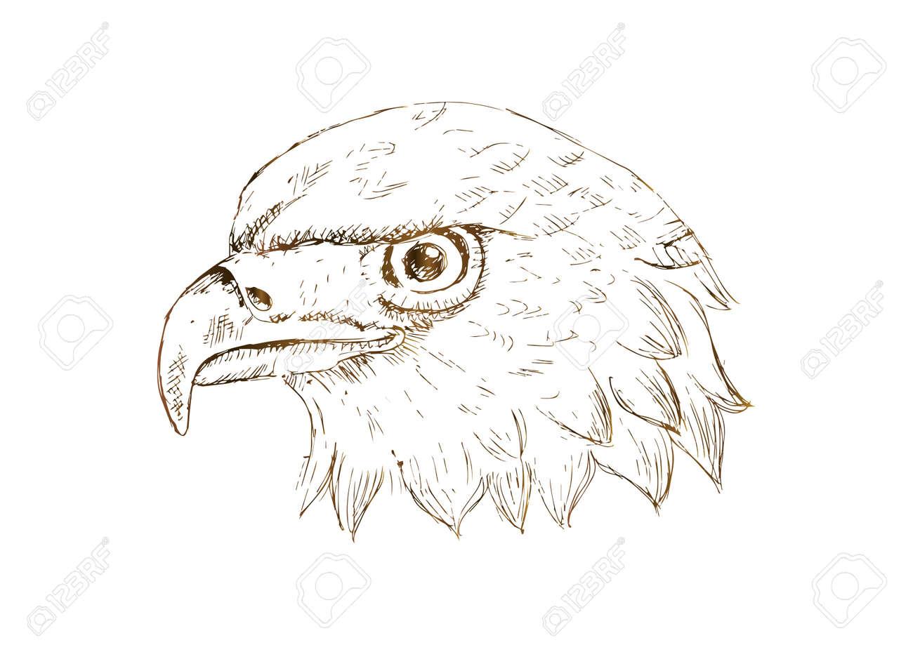 Eagle head Template  Hand draw illustration