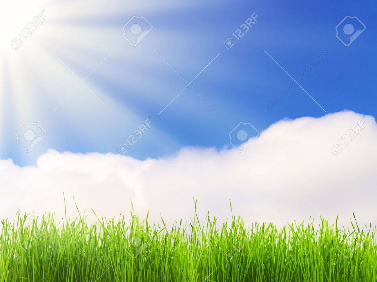 bright sun over the green grass and blue sky Stock Photo - 6671391