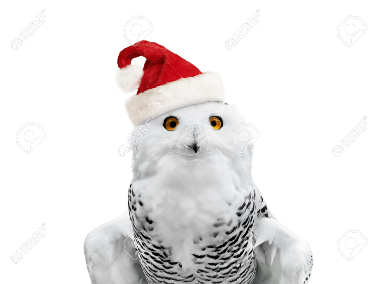 Fox with a hat new year or christmas animal isolated on white - Wild Cap New Year Owl In Santa Hat Over White Background