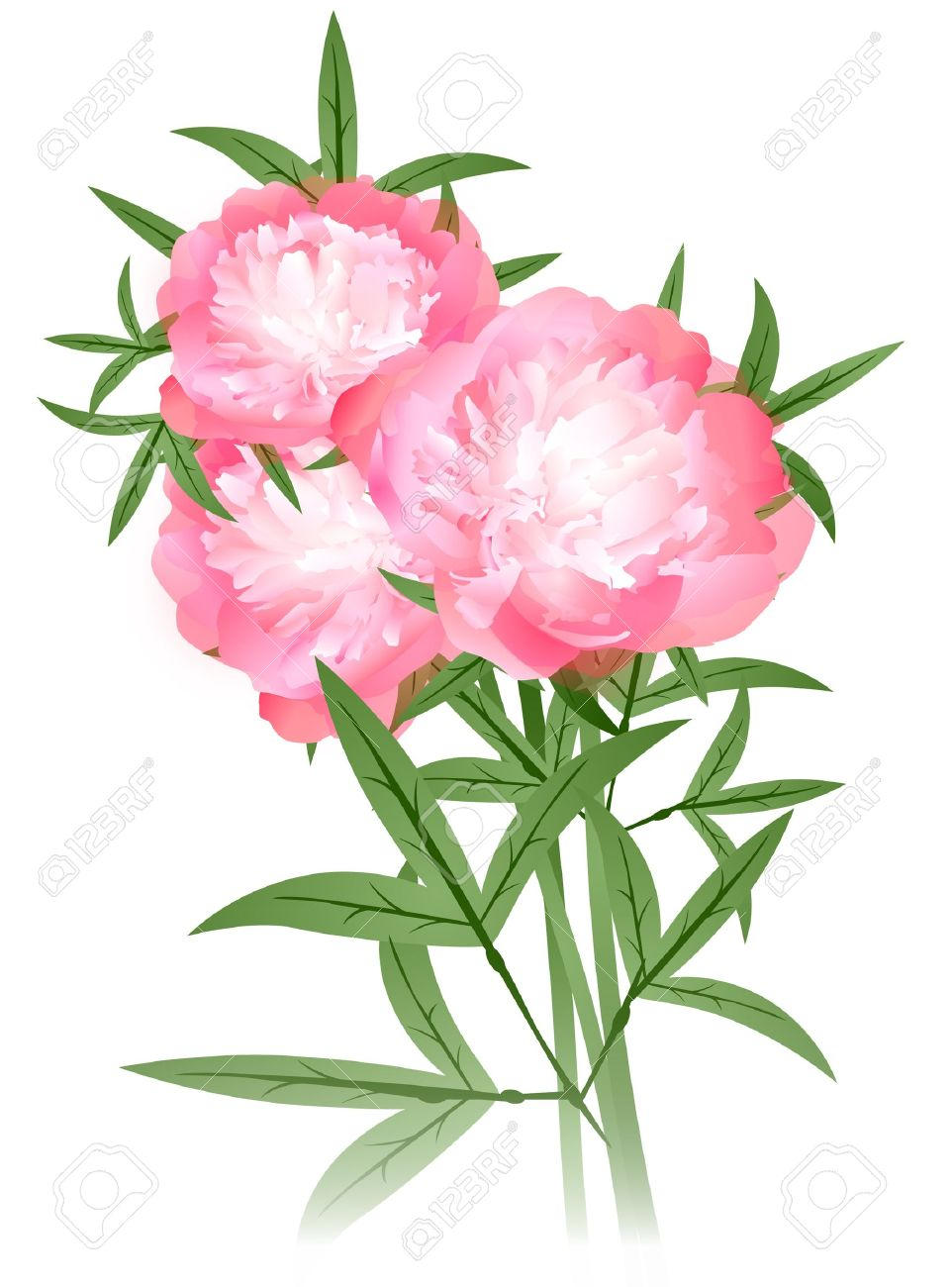 Peony flowers bouquet over white background royalty free cliparts peony flowers bouquet over white background stock vector 12203744 dhlflorist Images