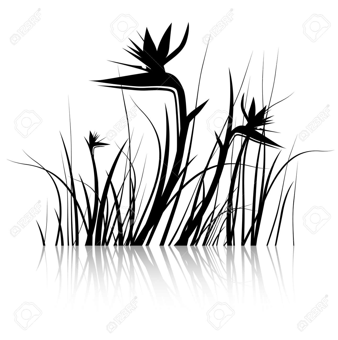 Bird of Paradise Flower (Strelitzia) Silhouette in Black and White Stock Vector - 17665784