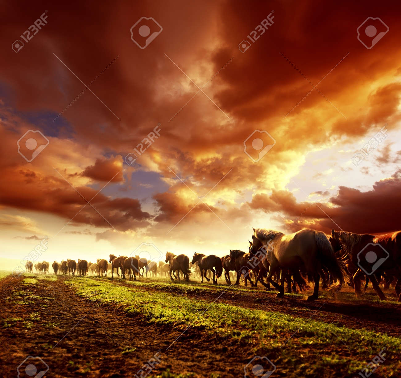 Running Wild Horses In Sunset Stock Photo Picture And Royalty Free Image Image 82721085