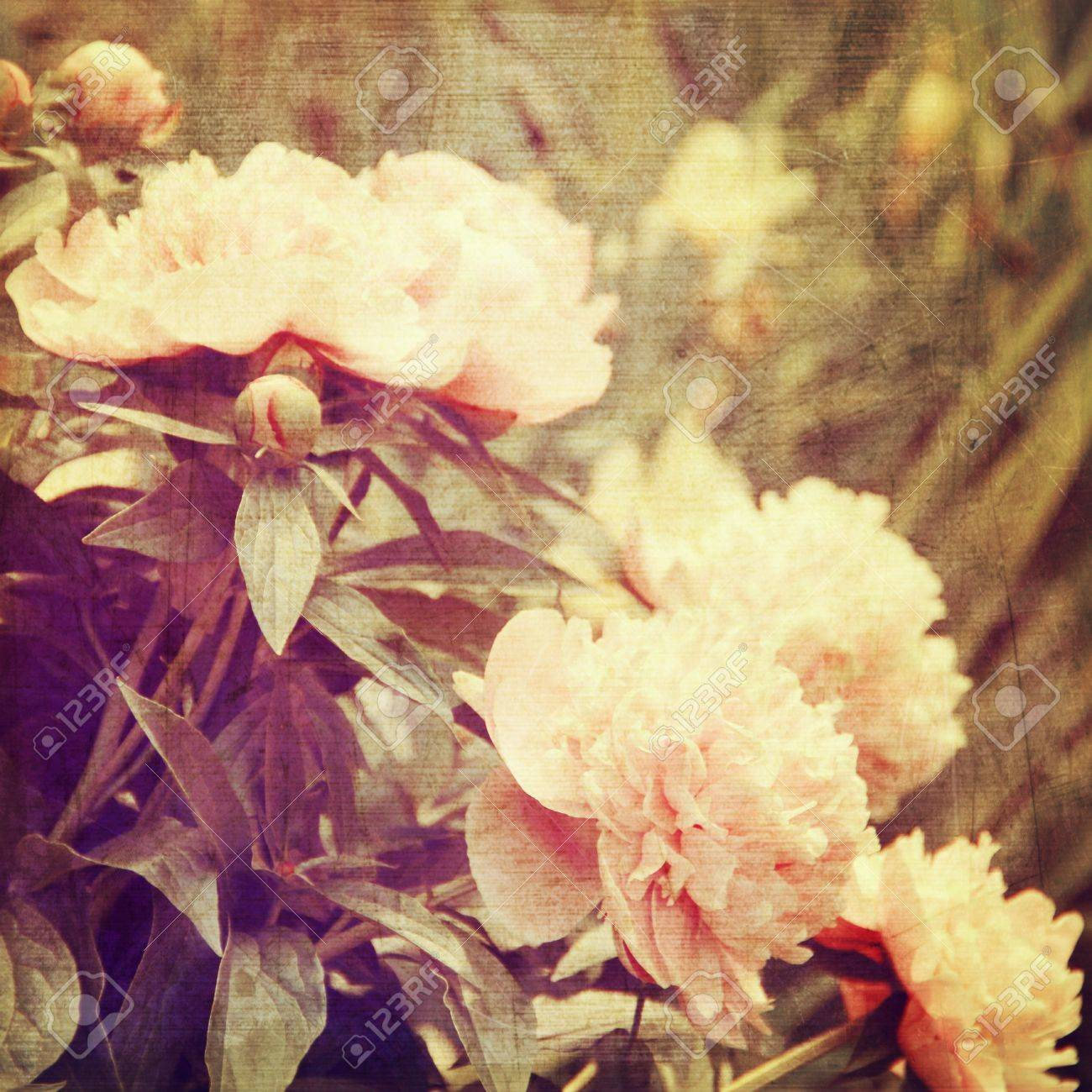 art floral vintage background with white peonies Stock Photo - 21169798