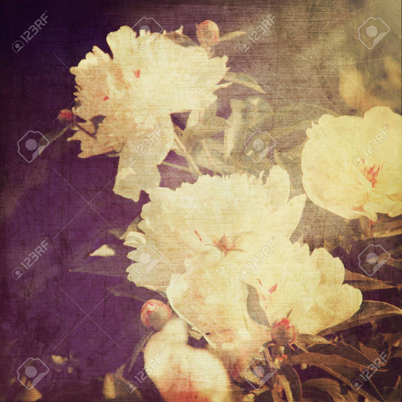 art floral vintage background with white peonies Stock Photo - 21169808