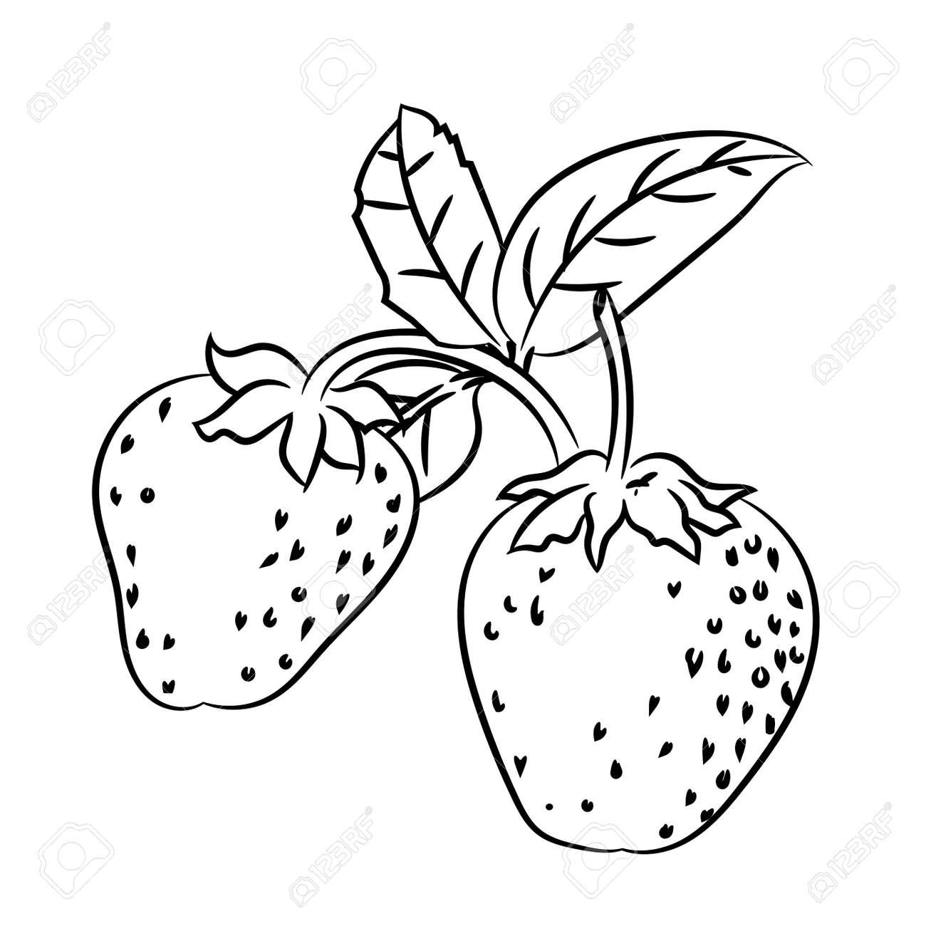 支店とイチゴの描かれたスケッチの手し葉の分離ぬり絵 ライン描画