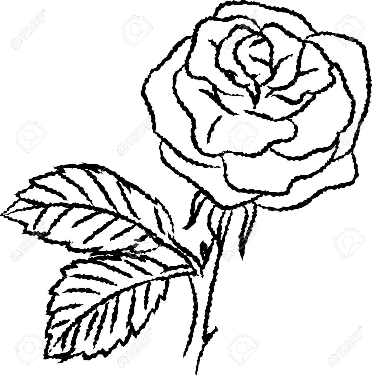 Hand Drawn Sketch Of Rose Isolated, Black And White Cartoon Vector ...