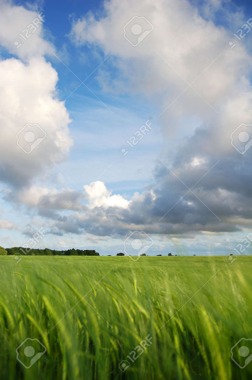 A landscape shot with field of corn and clouds. Stock Photo - 942368