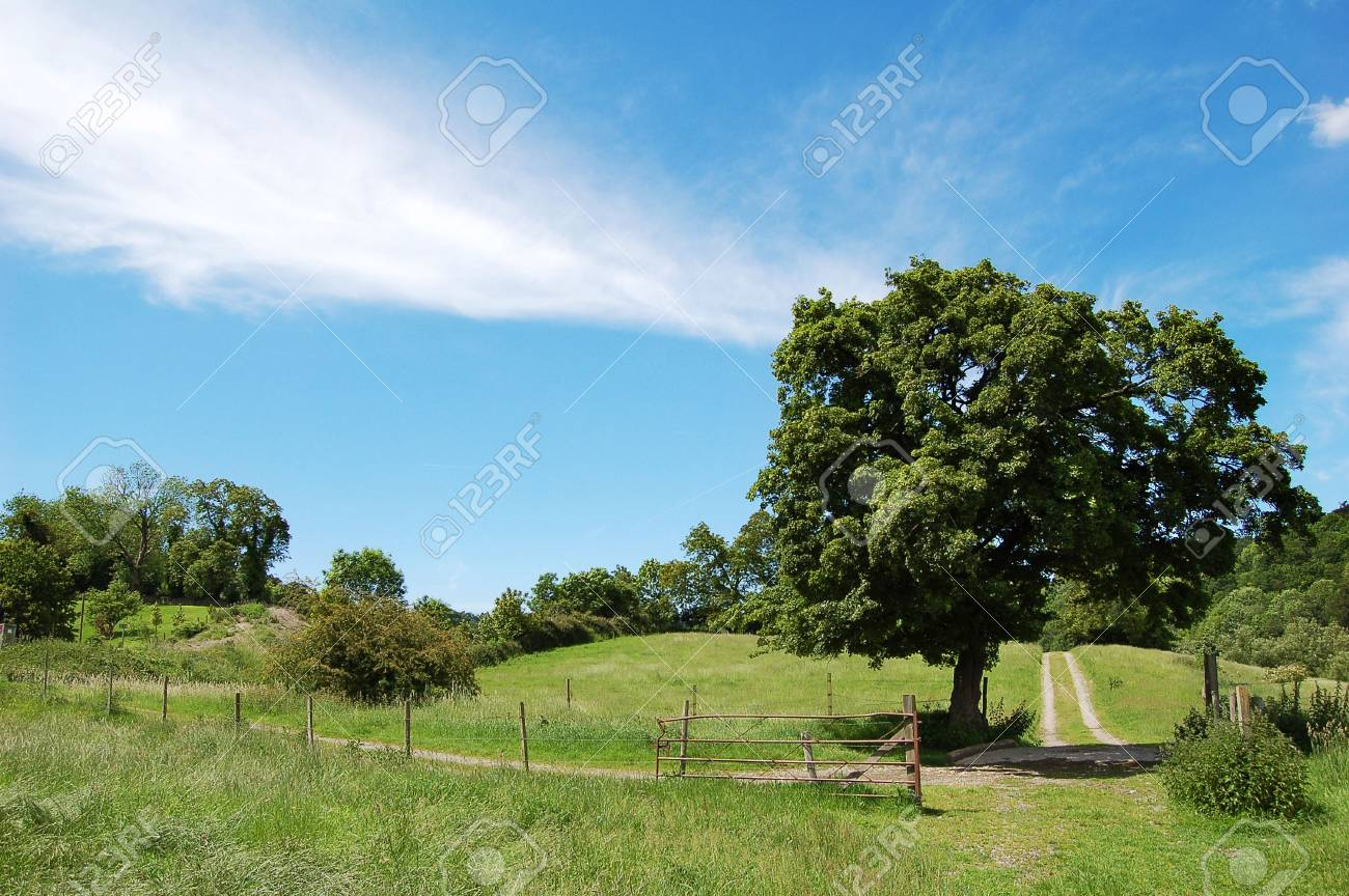 A rural landscape shot in summer. Stock Photo - 969087