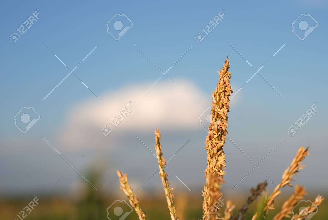 Young vegetation on a corn field against the dark sky Stock Photo - 5971931