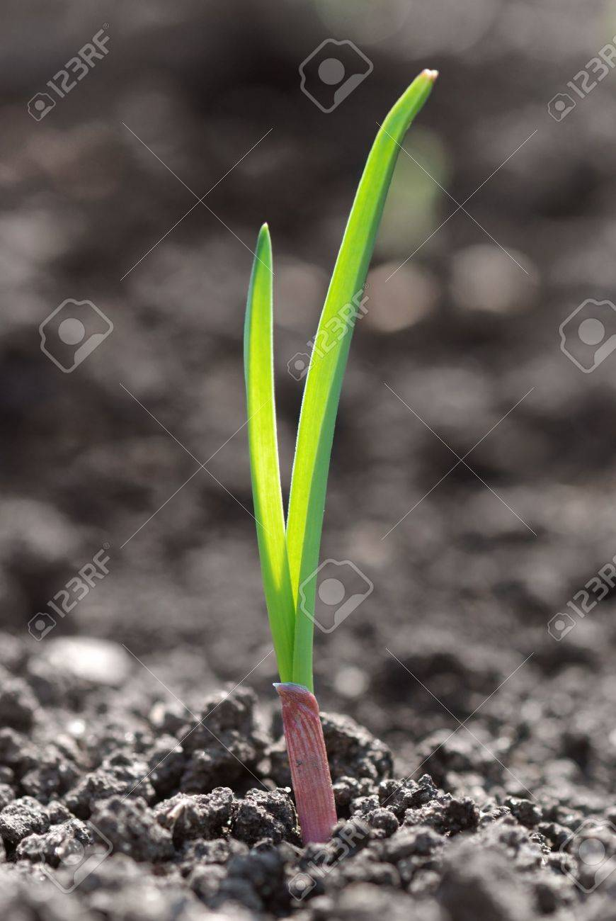 Closeup photo of the young green sprout Stock Photo - 6753794