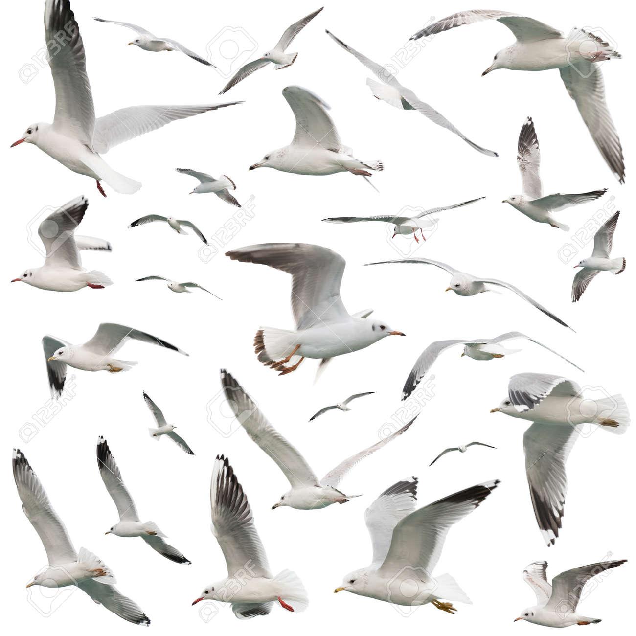 white birds set. isolated on white - 17689480