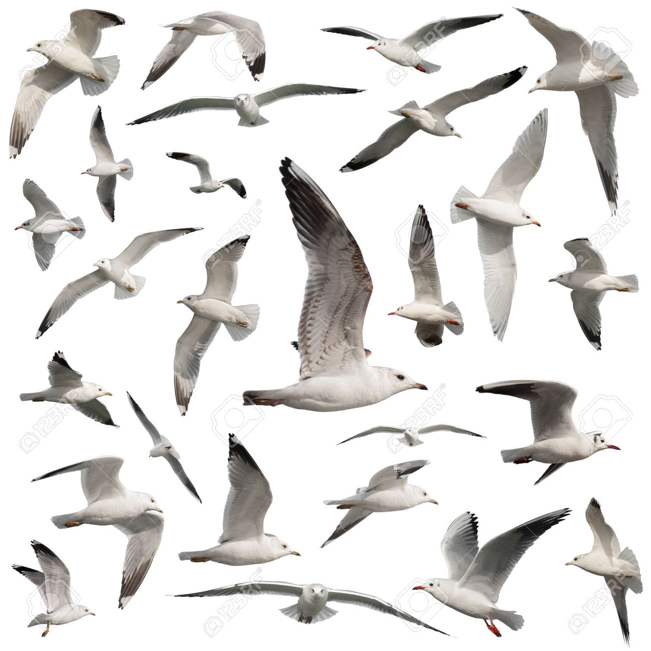 birds set isolated on white - 18627315