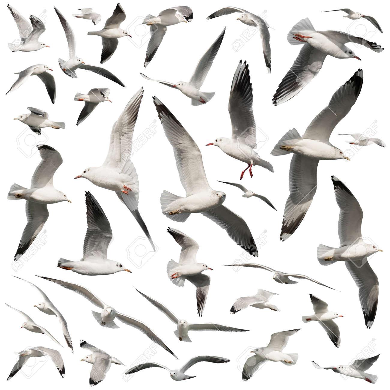 Seagull birds set isolated on white - 19198153