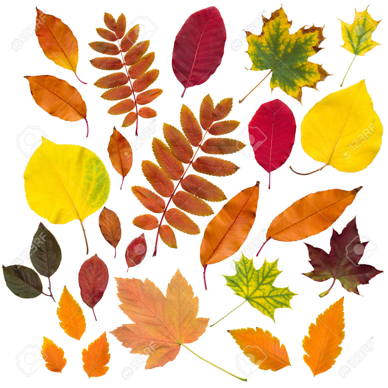 autumn leaves collection isolated on white background - 22379412