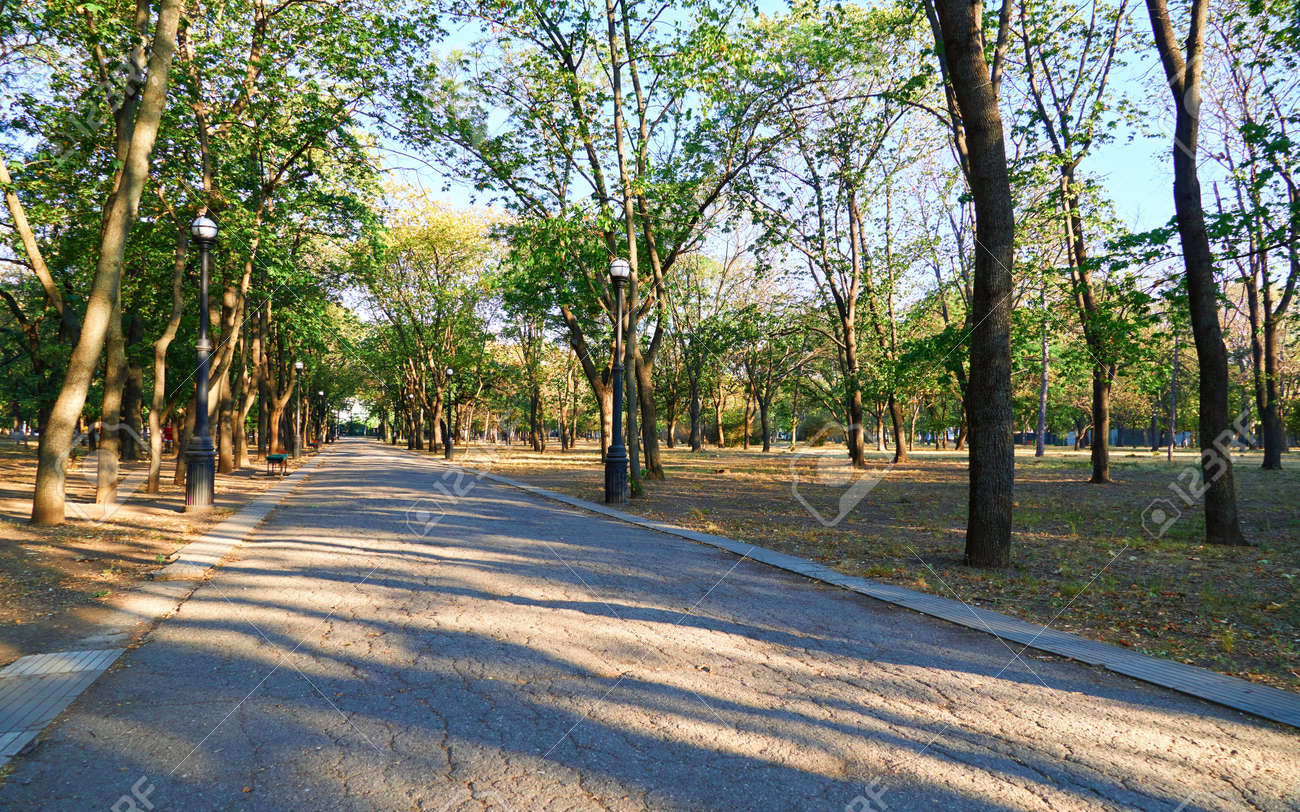 nature, trail in the city Park early in the morning, bright sunlight and long shadows of trees - 154827105