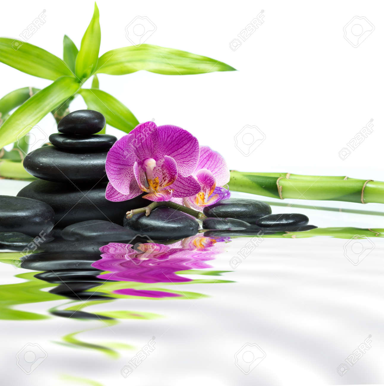 Habrumalas orchids in water wallpaper images - Water Orchid Stock Photos Images Royalty Free Water Orchid Images