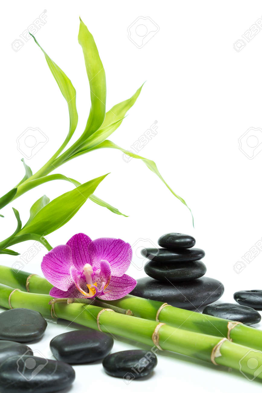 Lila Orchidee Mit Bambus Und Schwarzen Steinen Weisser Hintergrund