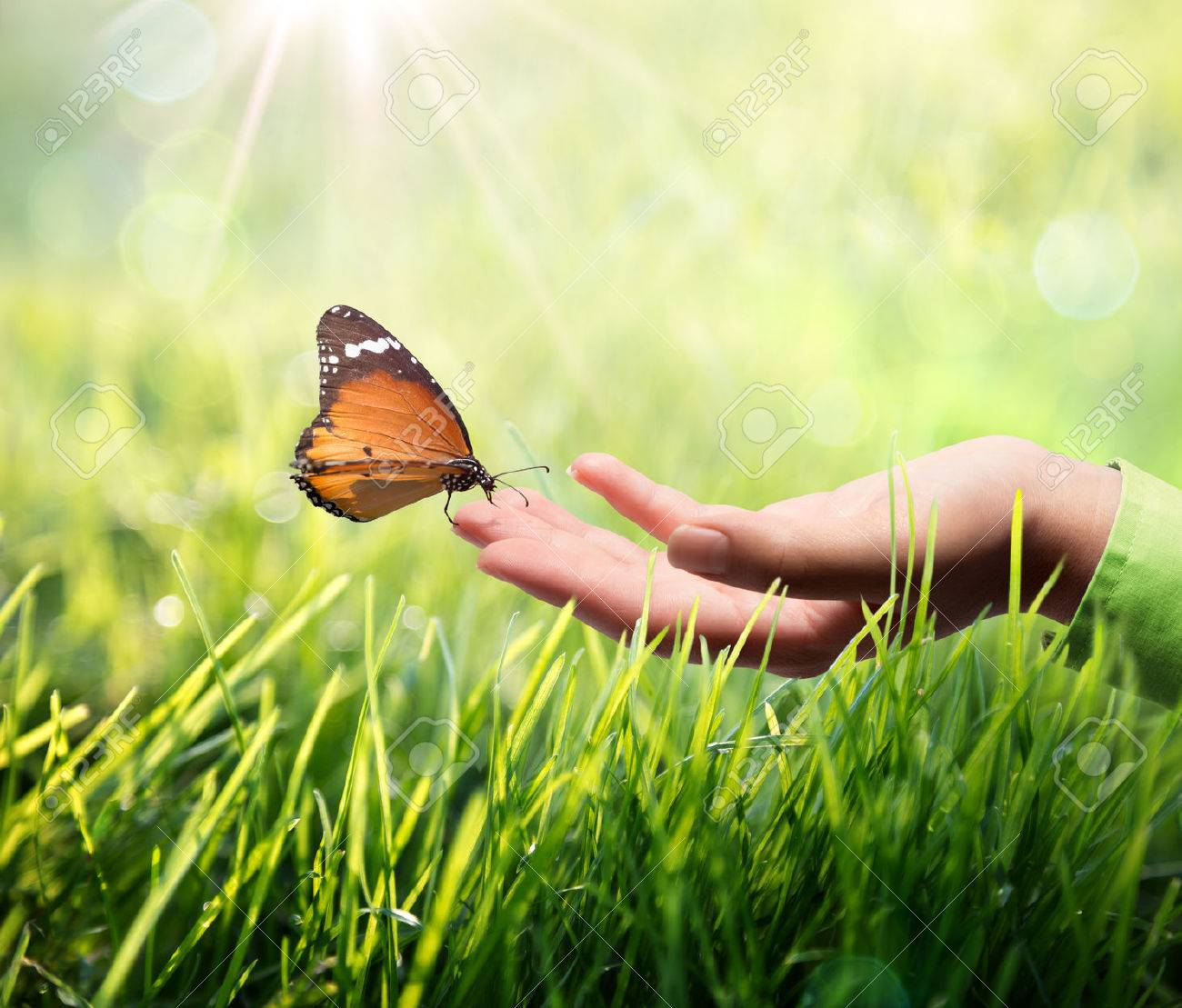 butterfly in hand on grass - 25451299