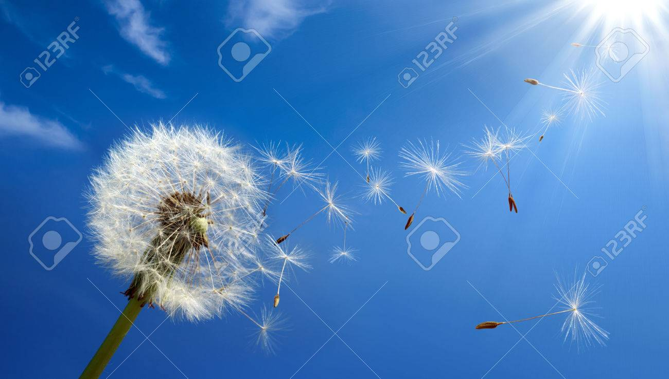allergy concept in spring - 27847844