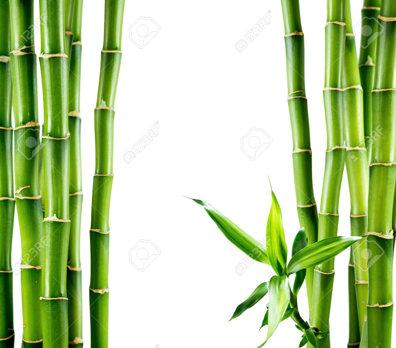 bamboo pole construction