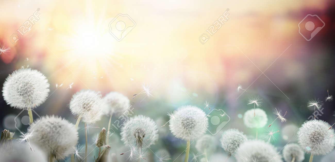 field of dandelion in sunset - bokeh and allergy - 38923214