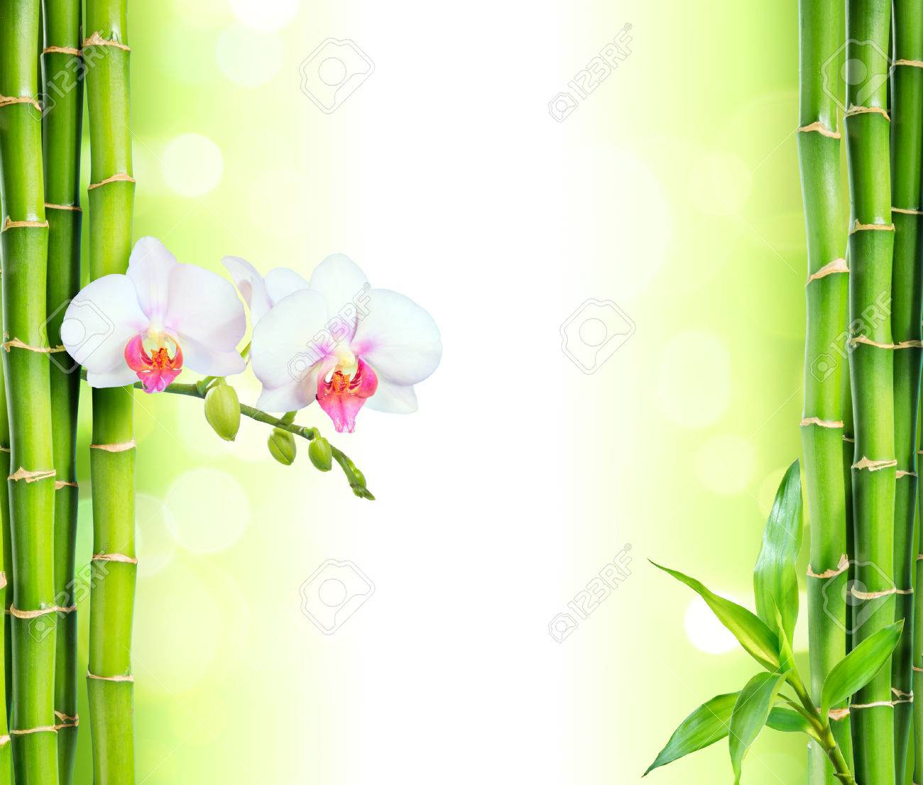 white orchid with bamboo beauty and spa background stock photo