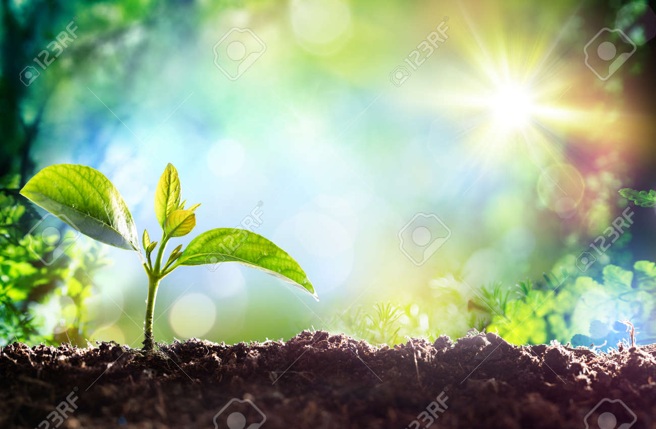 Growing Sprout - Beginning Of A New Life - 51173575
