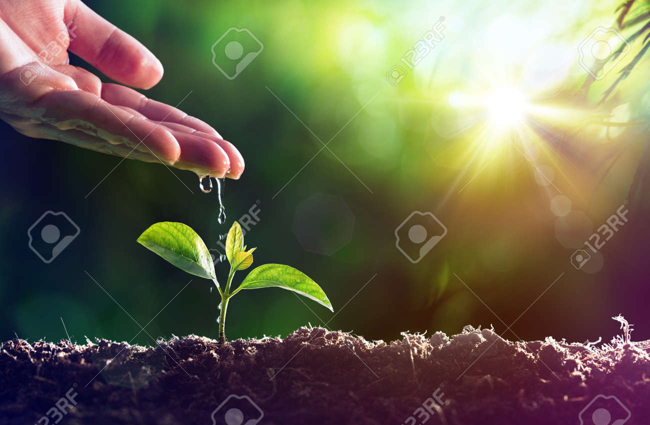 Care Of New Life - Watering Young Plant - 51918440