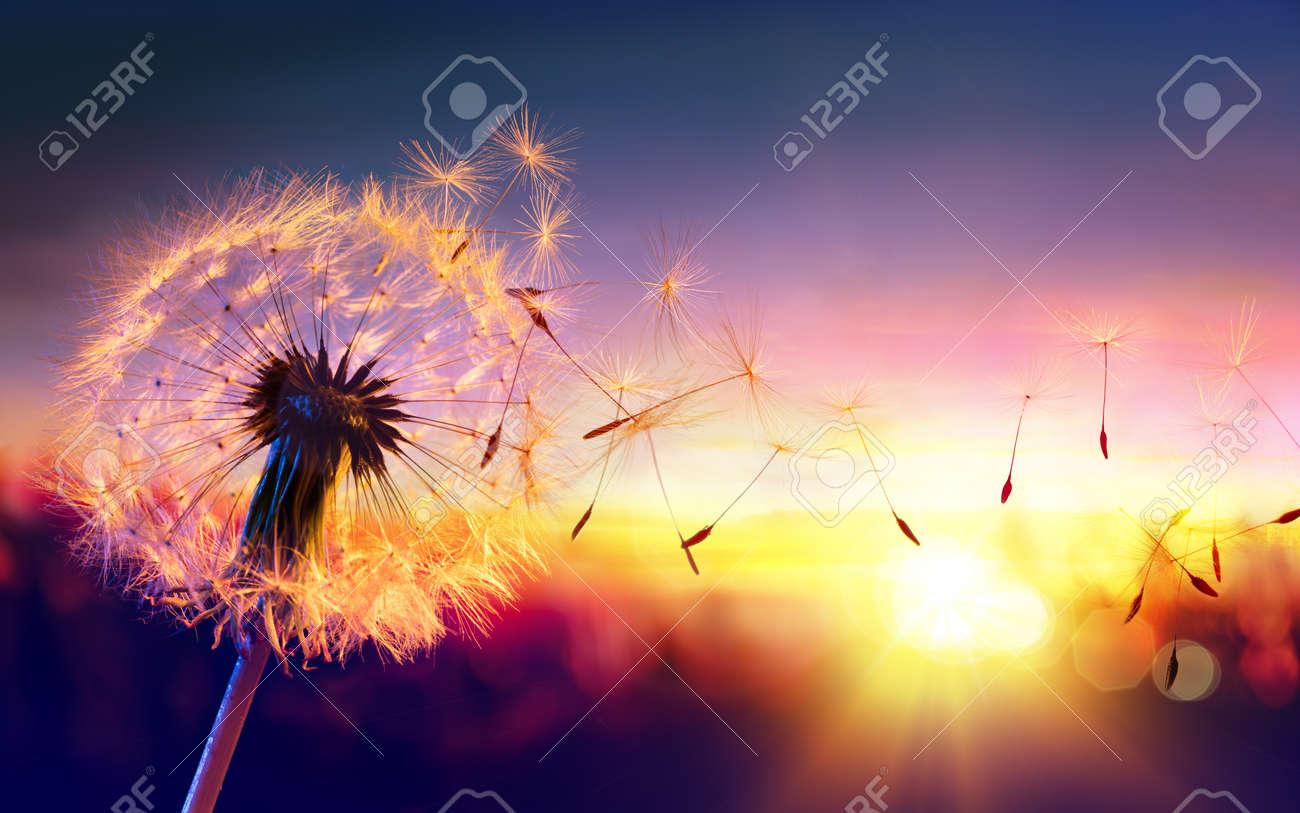 Dandelion To Sunset - Freedom to Wish - 56405108