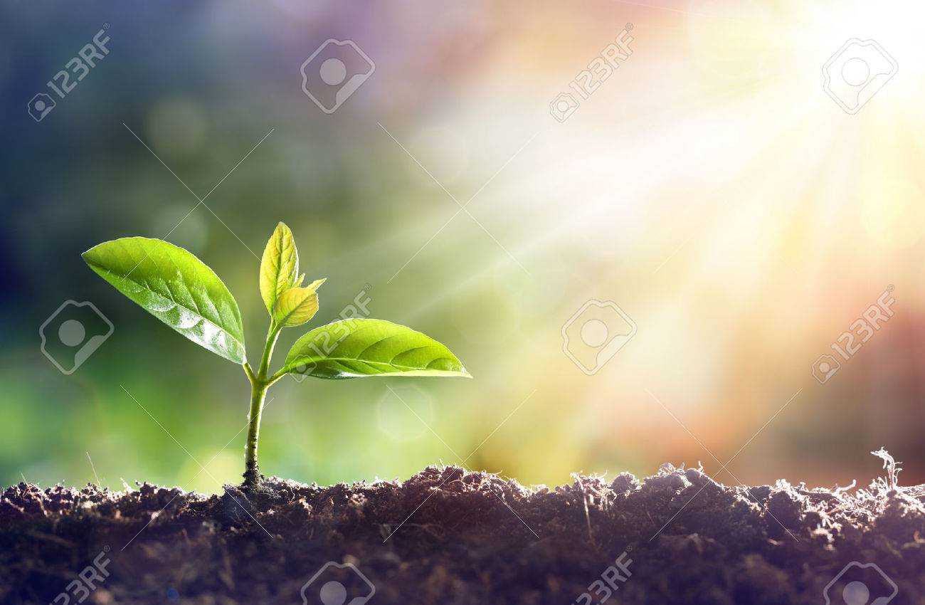 Young Plant Growing In Sunlight - 75003406
