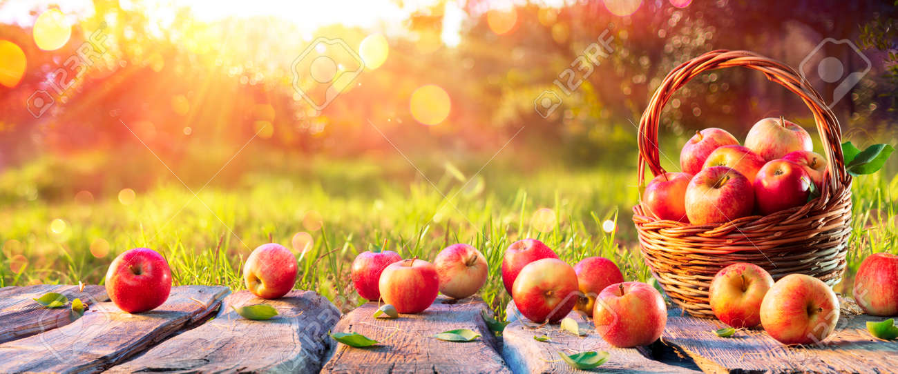 Red Apples In Basket On Wooden Table in Orchard At Sunset - Autumn Background - 154926271