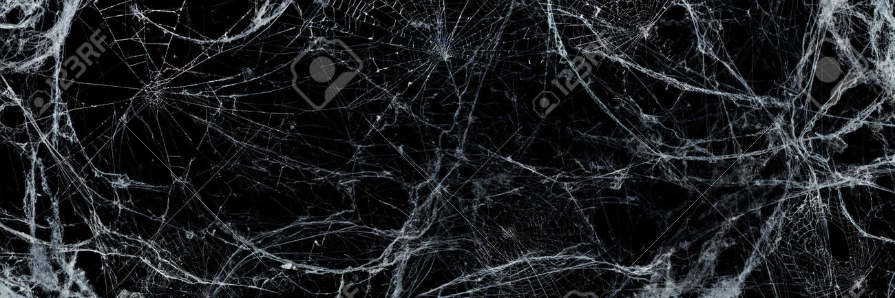 Spooky Cobweb In The Darkness - Halloween Background - 155835021