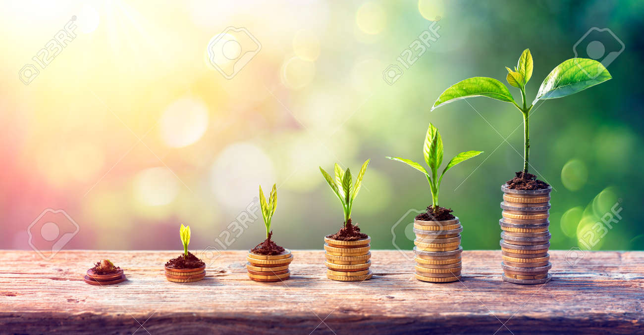 Money Growth Concept - Plants On Coin Stacks In Increase - 162813981