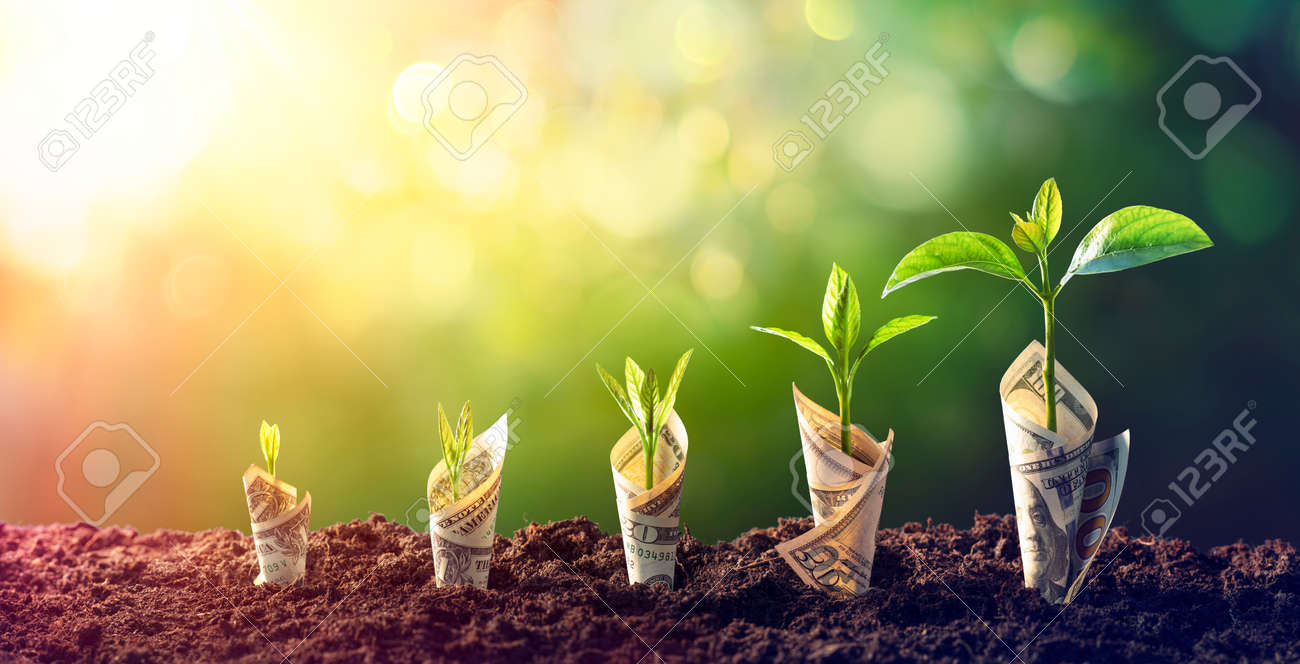 Dollar Seedling - Growth Concept - Plants On Banknotes In Increase - 162813984