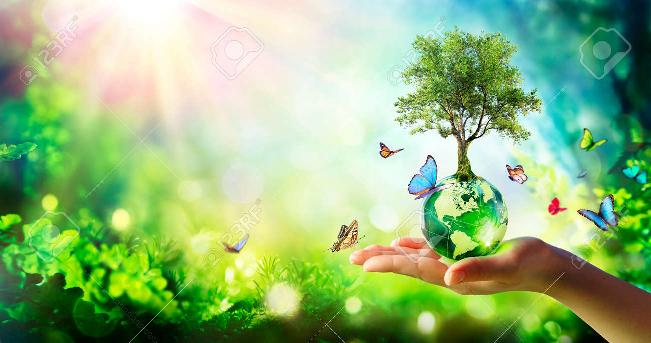 Environment - Tree Growth On Planet In Green Forest With Butterflies - 169657755