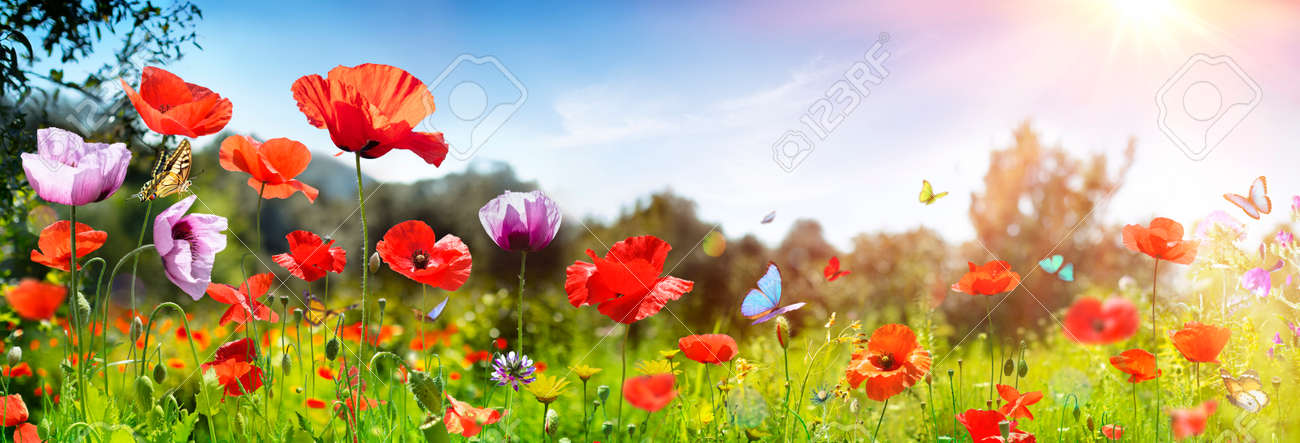 Poppies Field With Butterflies - Sunny Background - 169657763