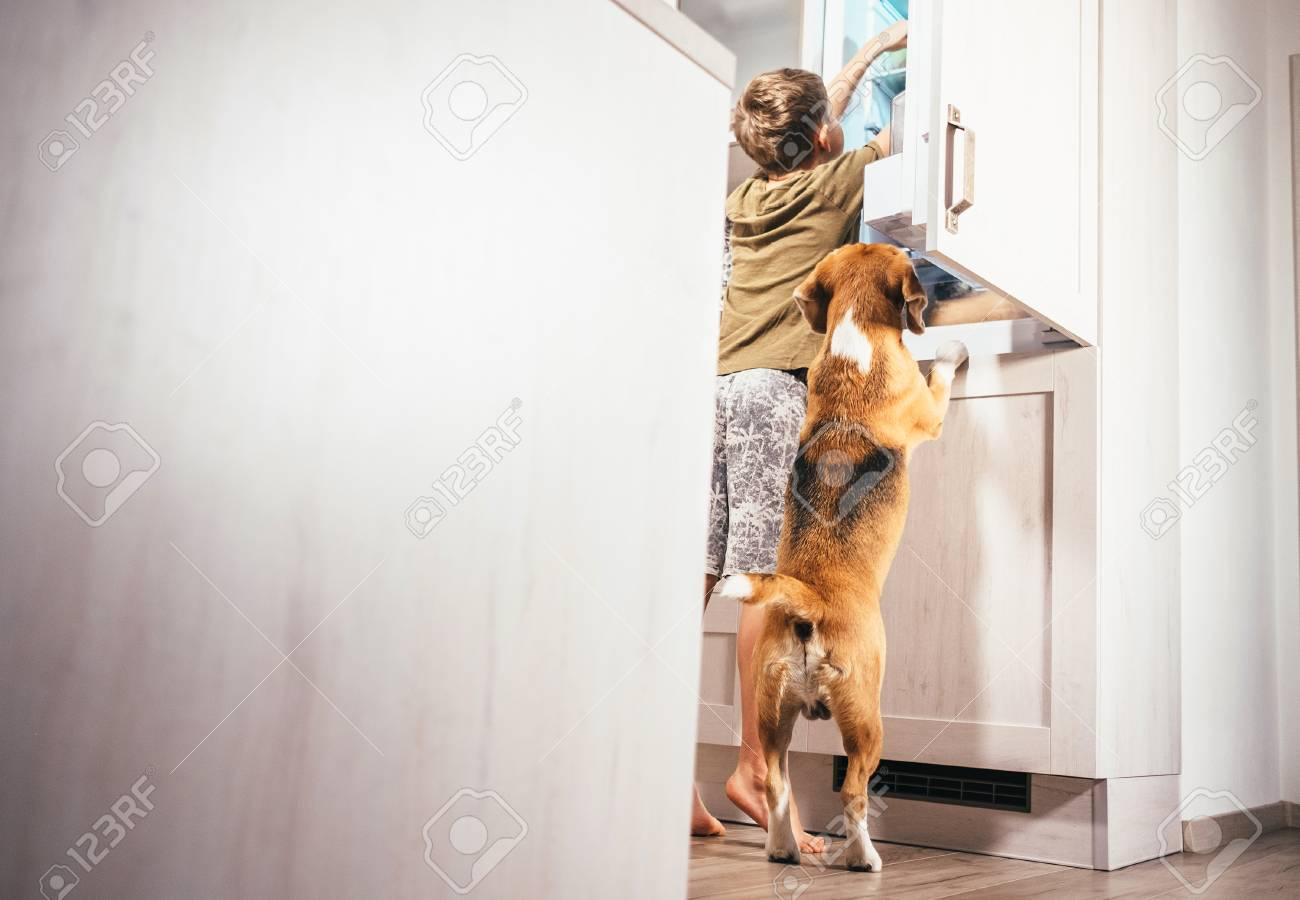 Boy and beagle dog look something delicious in refrigerator - 90577278