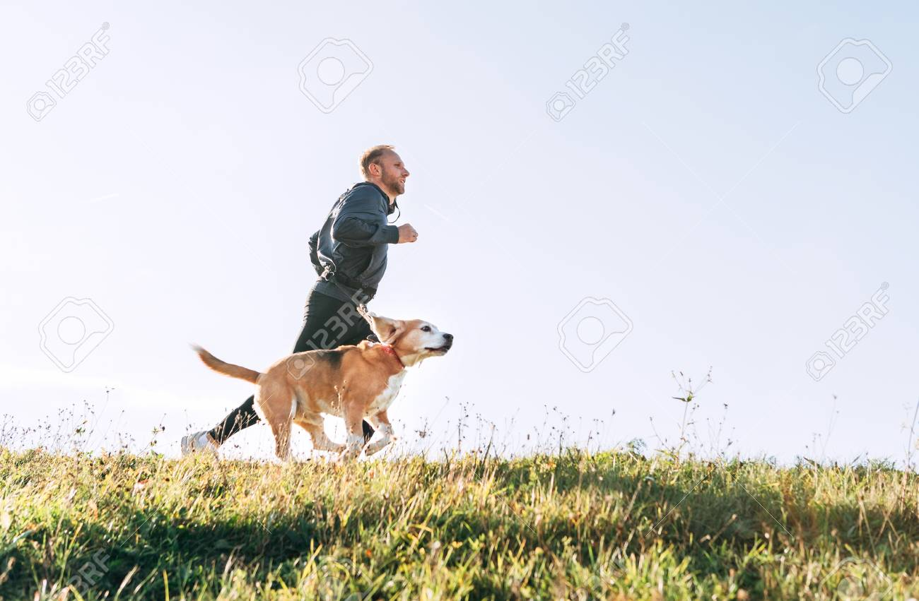 Man runs with his beagle dog. Morning Canicross exercise. - 112309474