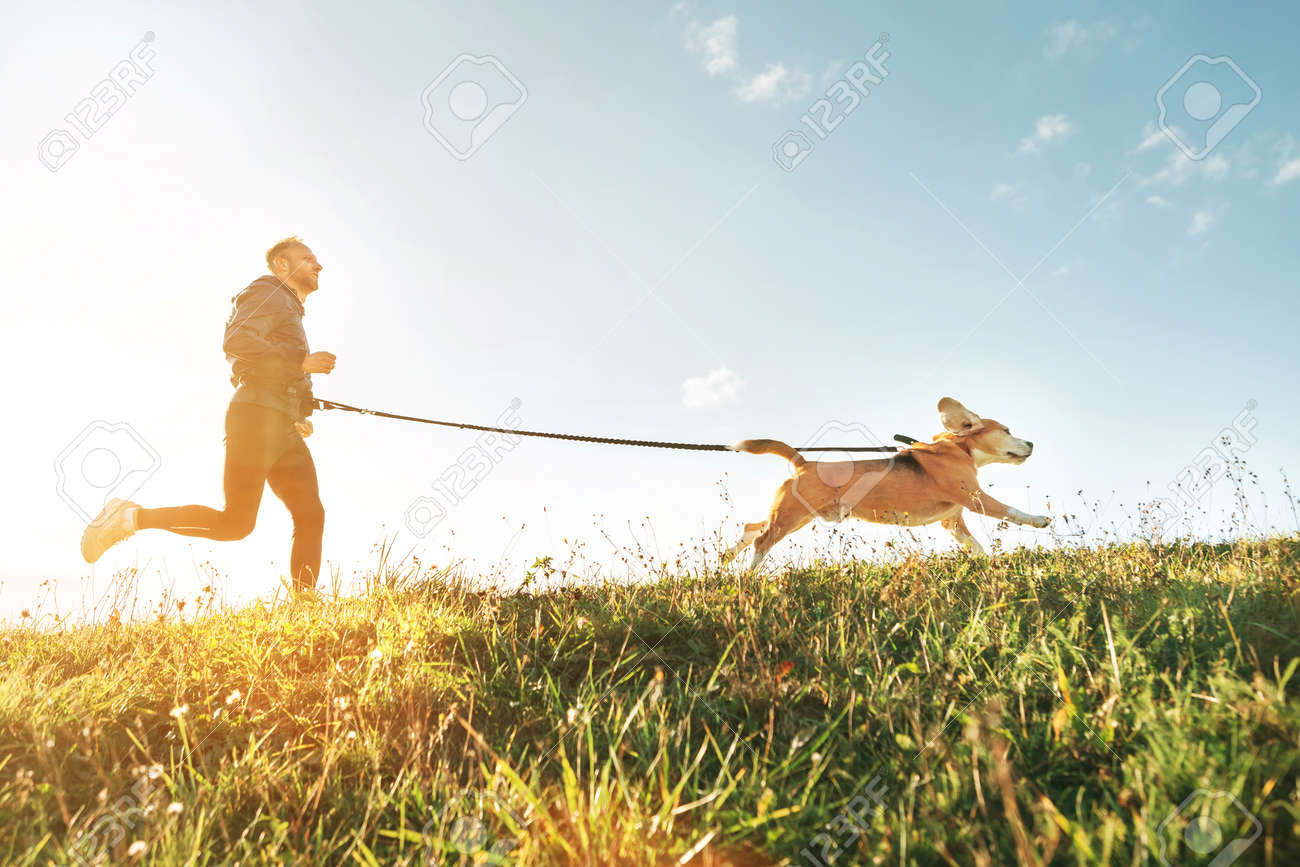 Canicross exercises. Man runs with his beagle dog. Outdoor sport activity with pet - 112309586