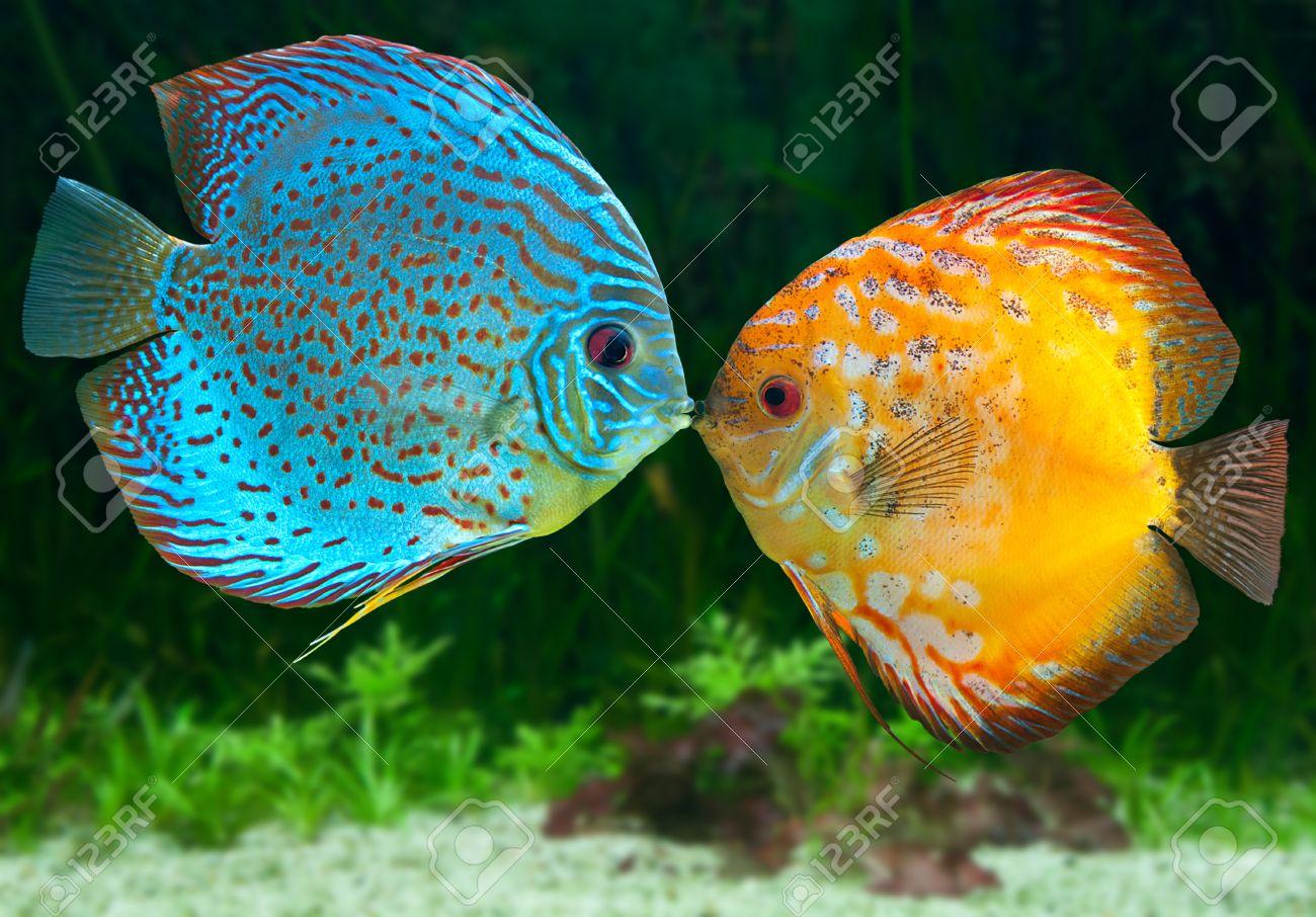 acquario e pesci affinità di coppia: langolo di lilith: le 12 ... - Acquario Ascendente Pesci Affinità