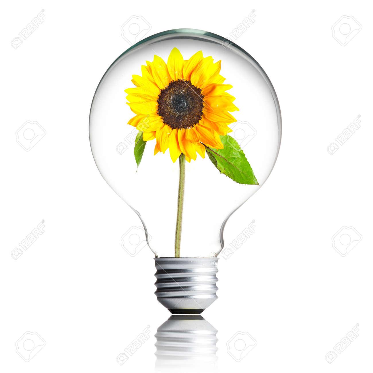 sunflower growing inside the light bulb - 13546237