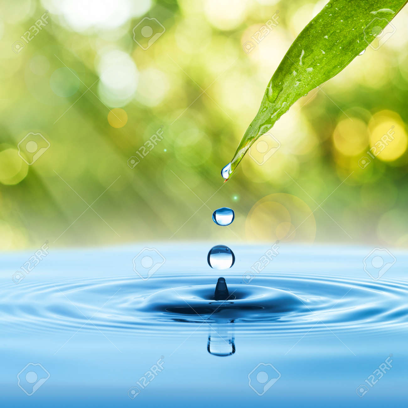 Water drop from green leaf on summer background - 14473866