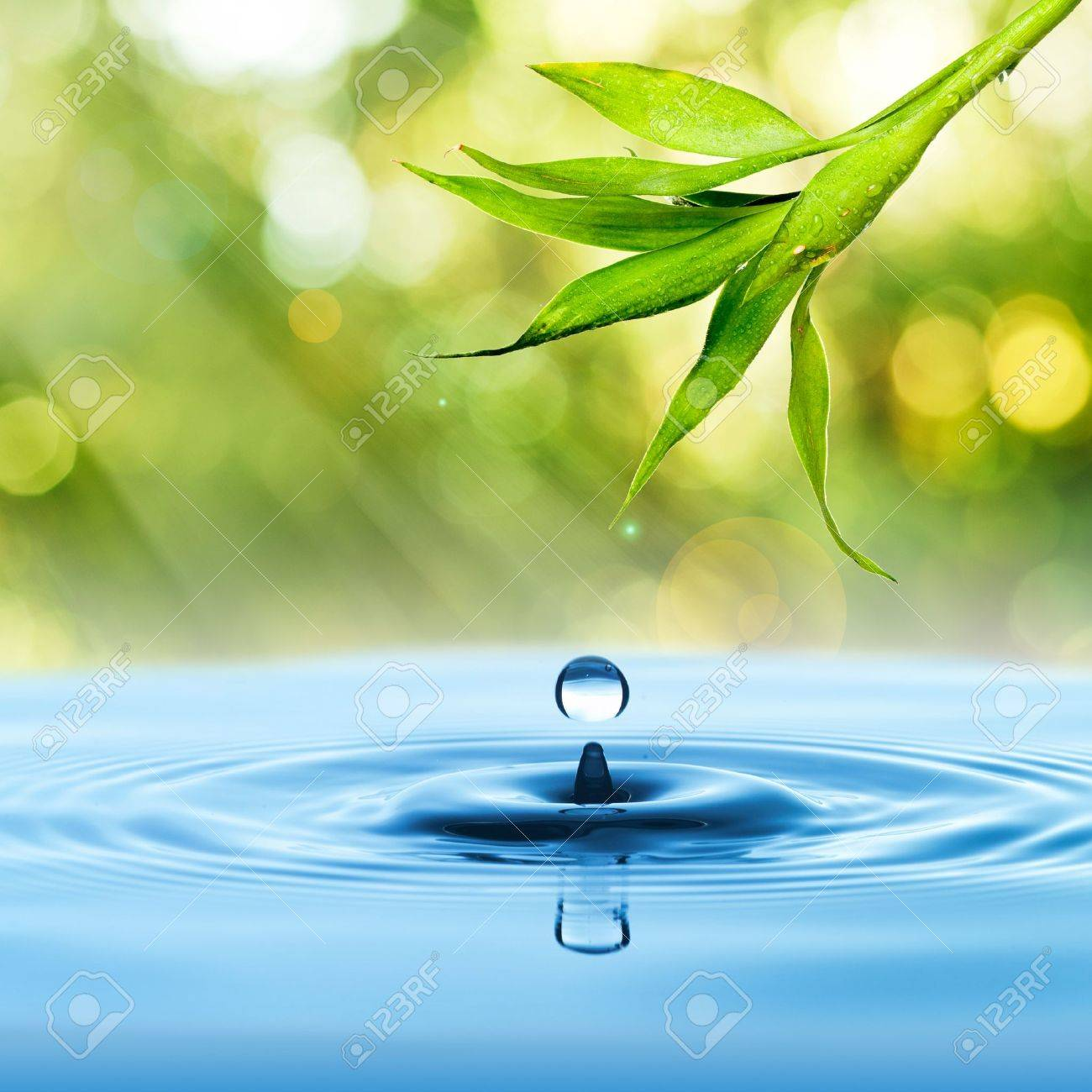 Fresh Green bamboo leaf with water drop on blue water and summer background Stock Photo - 14907918